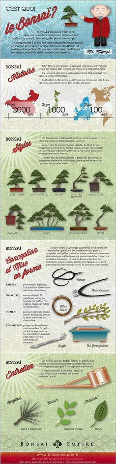 Bonsai Infographie
