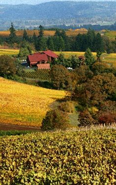 "Oregon: Willamette Valley vineyards (""1,000 Places to See Before You Die/ A Traveler's Life List"" by Patricia Schultz)"