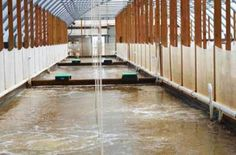 Shrimp Farming Biofloc Systems Research Update