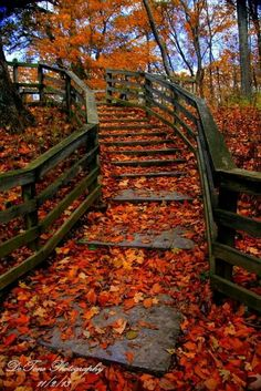 Back Pictures, Nature Pictures, Autumn Photography, Landscape Photography, Outdoor Play Areas, Best Background Images, Autumn Scenes, Autumn Aesthetic, Fall Is Here