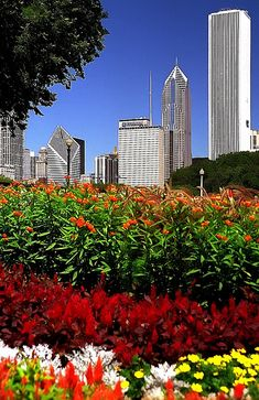 Grant Park gardens.- Prudential building in center used to be the tallest building in the city.