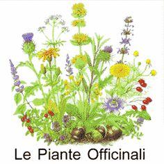 Le proprietà curative delle piante medicinali