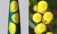 Golden Wattle Flag and wattle blossoms