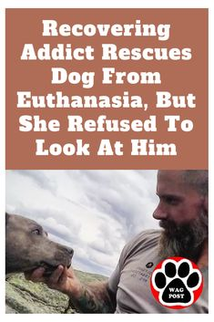 Recovering Addict Rescues Dog From Euthanasia, But She Refused To Look At Him Touching Animal Stories, Horse Dance, Recovering Addict, Lost Soul, Get Outdoors, Love At First Sight, New Parents, Happily Ever After, Rescue Dogs