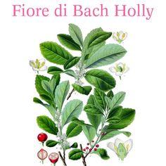 Auguriamo amore e felicità con Holly, il fiore di Bach indicato per alleviare i dolori fisici di natura infiammatoria. È associato al colore blu che porta tranquillità, serenità e moderazione.