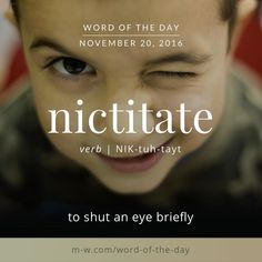 The #wordoftheday is nictitate. #merriamwebster #dictionary #language