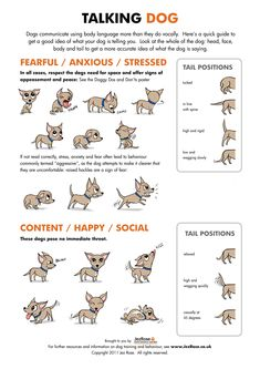 JezRose-Talking-Dog-300dpi.jpg (2493×3526)