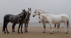 The horses are Brigitte Eberl's Cobra mare resins. They were brought to life by the Dutch artist, Josine Vingerling and are owned by Anne Hudson of Arizona.