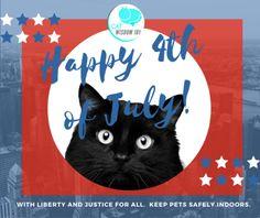 4th of July black cat