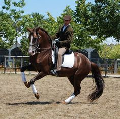 Dressage Movements Dictionary Part One - Show Horse Gallery, A Different Horse is Featured Every Day
