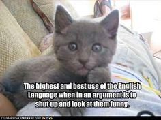 Internet Cat on Philosophy