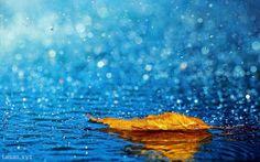 Tại sao khi trời mưa ta ngủ rất ngon?