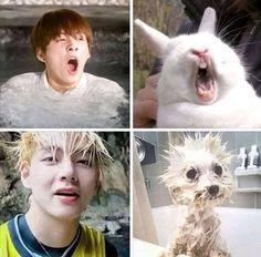 Memes y cómics yaoi - Mi Animal Interior Bts Memes Hilarious, Bts Funny Videos, Foto Bts, Bts Taehyung, Bts Jungkook, Namjoon, K Pop, Fanfic Kpop, Vkook Memes