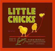 Lindsay, Tulare County Little Chicks Orange Citrus Fruit Crate Label Advertising Art Print
