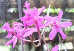 Información sobre el famoso jardín botánico cubano, fotos de flores de orquídeas y del lugar. Mapa con los principales sitios de interés a su alrededor