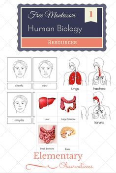 Like botany and zoology, study of the human body begins with the external parts before going into the internal. The internal workings of the...