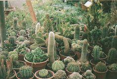 Cacti alllll around meh!