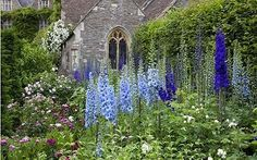 Must have in the garden: delphiniums!