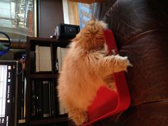 A red tray is no Garfield's favorite place