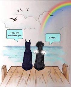 Mundo Animal, My Animal, I Love Dogs, Puppy Love, Der Boxer, Pet Dogs, Dog Cat, Doggies, Miss My Dog