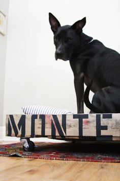 DIY Dog Bed from a Pallet | Claire Zinnecker for Camille Styles - Love It... going to have to try making this some time:)
