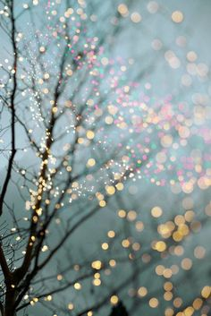 FB cover photos/Wallpaper Winter Photography - Holiday Fairy Lights in Trees, Festive Winter Scene, Fine Art Landscape Photograph, Large Wall Art