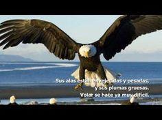 Los Principios del Águila. Ejemplo de Superación y Liderazgo por Lur García - http://hermandadblanca.org/2013/07/06/los-principios-del-aguila-ejemplo-de-superacion-y-liderazgo/