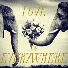 Elephant Loving | Friday Wrap Up! - The Lovely List | Lovely Bride Blog