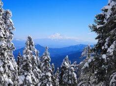 Snowy Firs Wallpaper Winter Nature