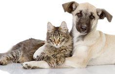 animal photography wallpaper free