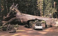 Visit the Redwood Forest