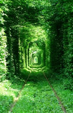 Túnel do amor  O túnel do amor nada mais é que uma ferrovia construída no meio de uma floresta na Ucrânia. O espaço utilizado para a passagem dos trens é a única brecha em meio às árvores, tornando o local um túnel perfeito para caminhadas românticas. Ele possui 1,8 quilômetros de extensão e não se assemelha a nenhuma outra rota ferroviária no continente europeu.
