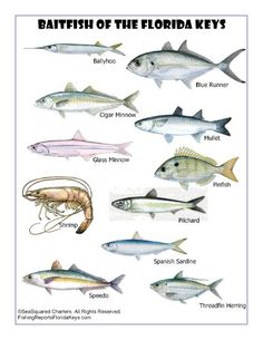 Fishing On Pinterest The Barber Fishing Report And Fish