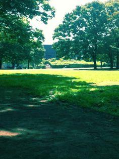 【リアルキ茅ヶ崎編】茅ヶ崎駅北口から5分ほど歩いた場所にある「中央公園」