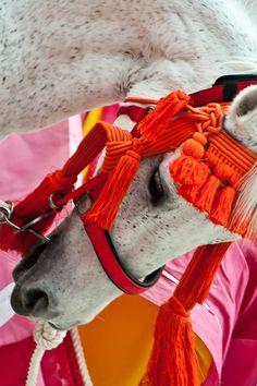 CABALLOS ADORNADOS - A brightly adorned Horse.