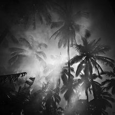 Jungle Moonlight