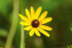 Yellow Flower in Bent Creek.