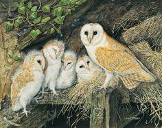 Barn owl family.