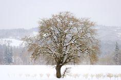 ~Winter's Landscape~