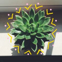 """She'll send cute things like this to Carter over snapchat or they will go on her story, stuff like """"new addition to my plant family"""" or something like that. She is very cute omg"""