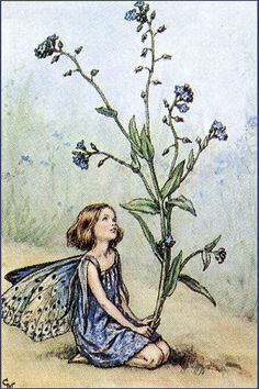 Forget Me Not Fairy, Cicely Mary Barker