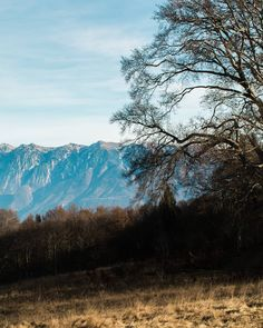 Elvis Presley - Auld Lang Syne.   Saluteremo questo 2016 da lassù in cima. Ciaone.   Monte Denervo Briano Gargnano BS. Lago di Garda. Vista Monte Baldo.