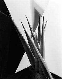 Available for sale from Weston Gallery, Imogen Cunningham, Agave Design (ca. Gelatin Silver Print, 13 × 10 in Paul Outerbridge, History Of Photography, Still Life Photography, Art Photography, Dramatic Photography, People Photography, Fashion Photography, August Sander, James Cagney