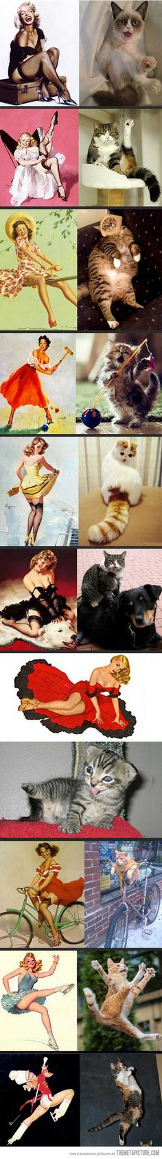 Pin-up cats!