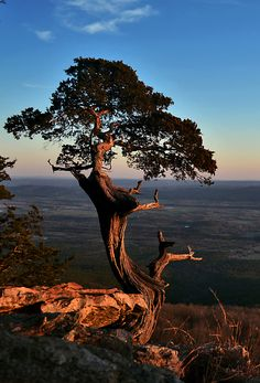 The famous tree at Mount Magazine State Park Arkansas by Jeka World Photography Beautiful World, Beautiful Places, Beautiful Pictures, World Photography, Beautiful Landscapes, The Great Outdoors, State Parks, Places To See, Scenery