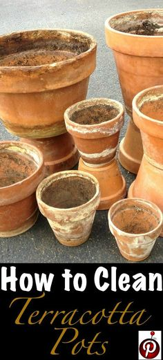 Follow these simple step-by-step instructions to clean terracotta pots and give your crusty old clay pots new life. | GetBusyGardening.com