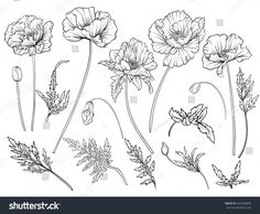 Poppy flowers. Set of outline flowers.