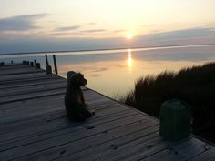 Ima Local Category. Puppy Love. Arlene Davis.jpg