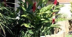 Jardim com cercado de Madeira