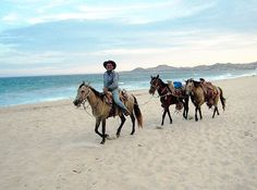 Horses on the beach at Los Cabos, Baja California Sur, Mexico